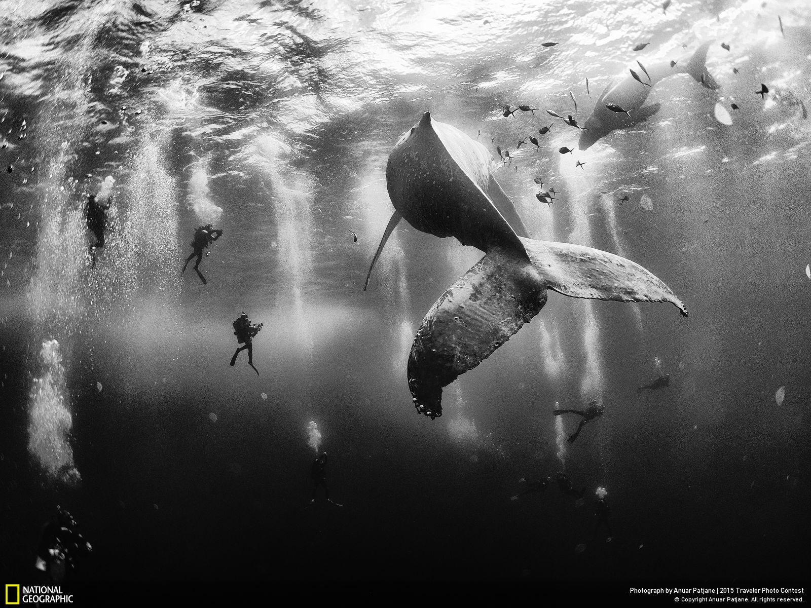 national-geographic-2015-1
